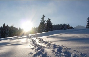 Schneeschuhspuren